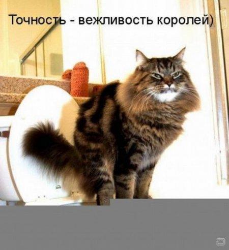 Ржачні тварини ч 1